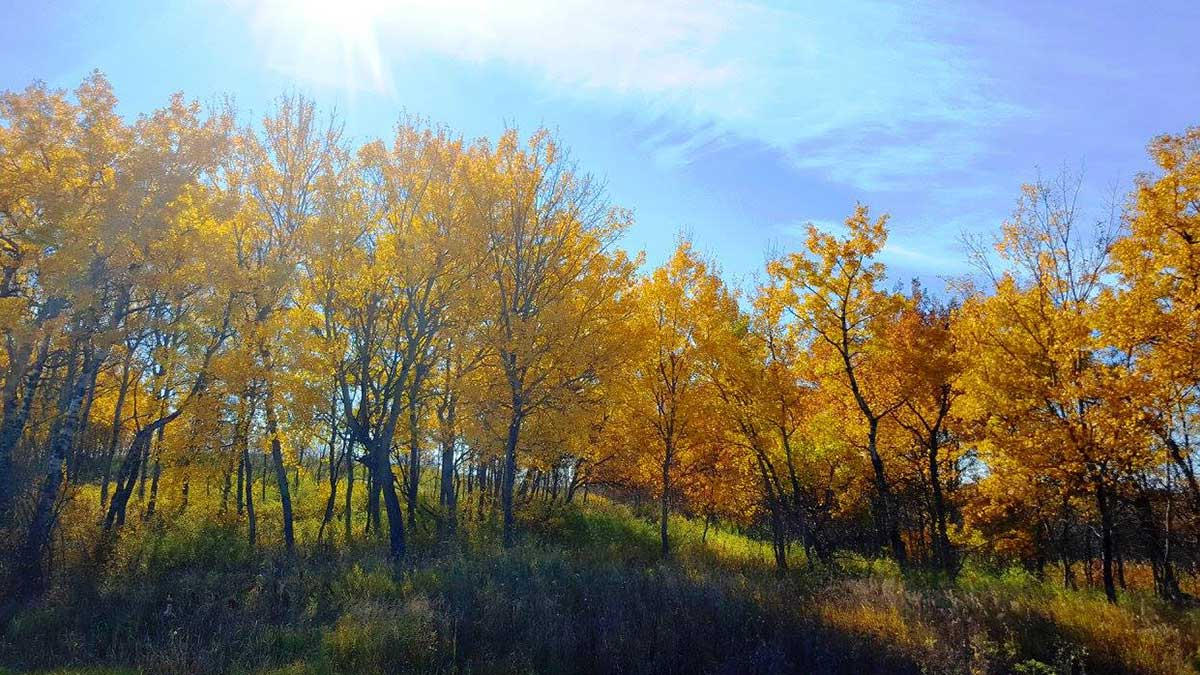 acreage-development-near-saskatoon