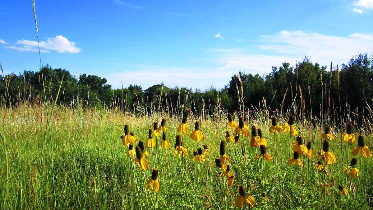 grassword-estates-lots-for-sale