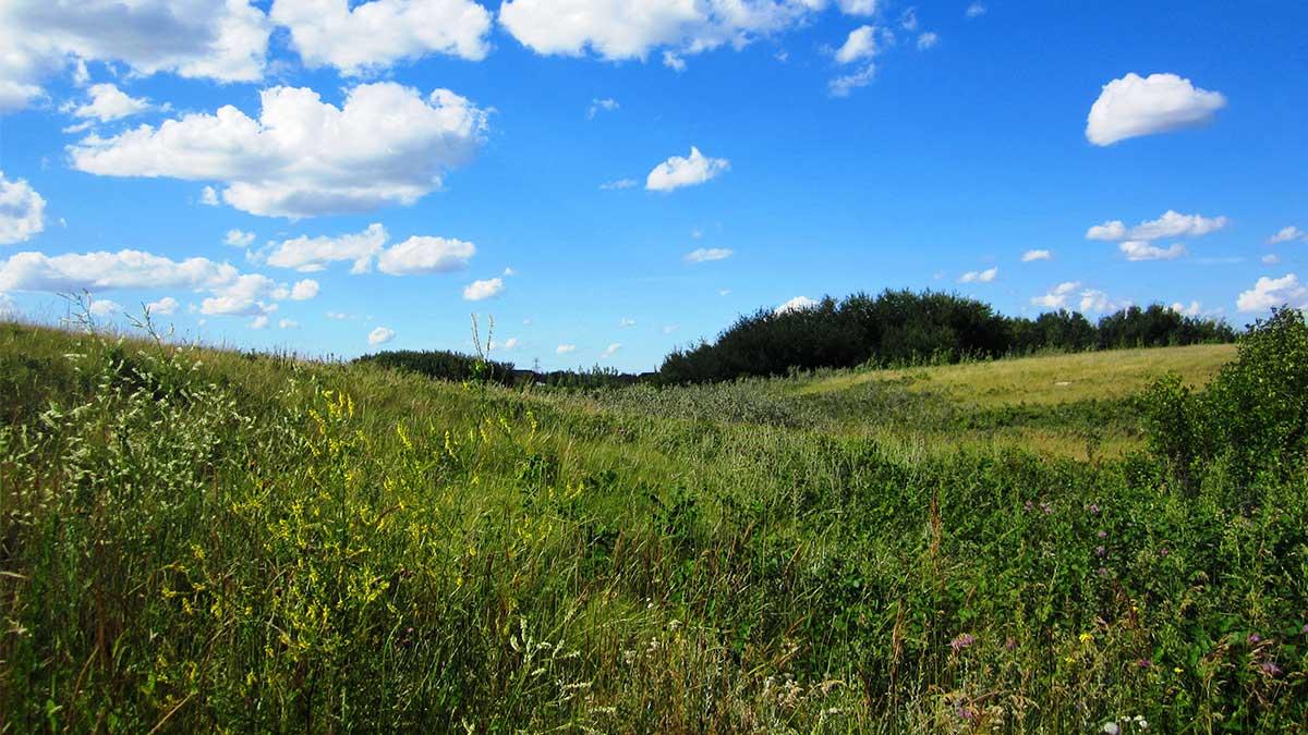 tree-lots-near-saskatoon